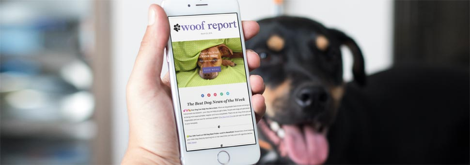 Woof Report Dog Email Newsletter